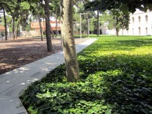 jardin con enredadera en suelo